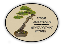 Ottawa Bonsai Logo